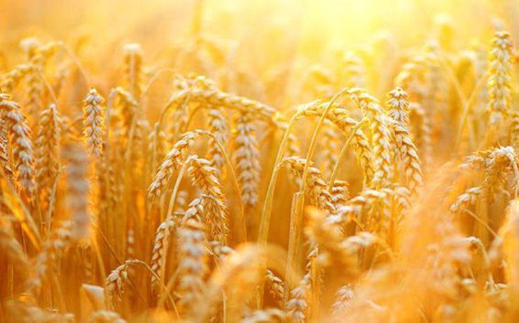 Азербайджан резко увеличил импорт пшеницы