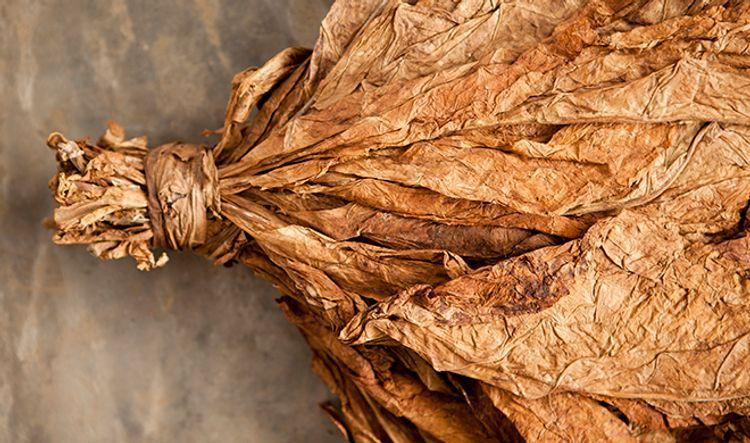 Азербайджан резко увеличил экспорт табака