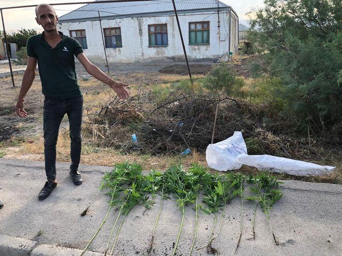 Həyətində narkotik becərən Xızı sakini saxlanılıb