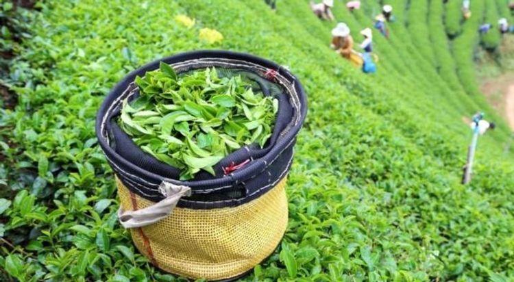 Азербайджан увеличил экспорт чая в Грузию на 20%