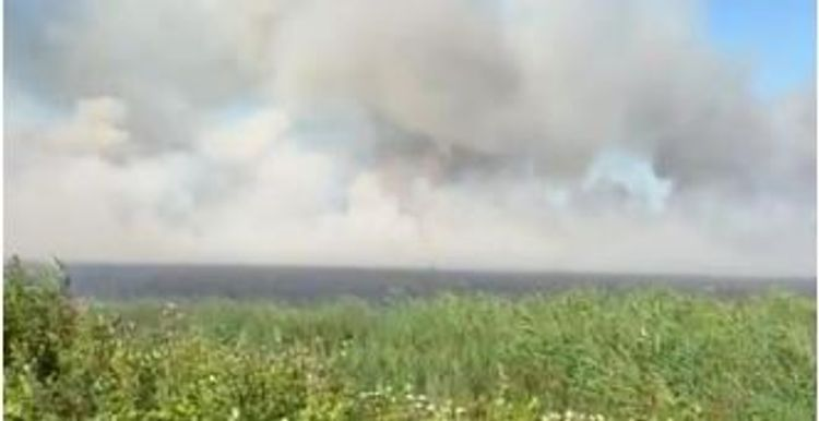 Предотвращен пожар в Гызылагаджском государственном природном заповеднике