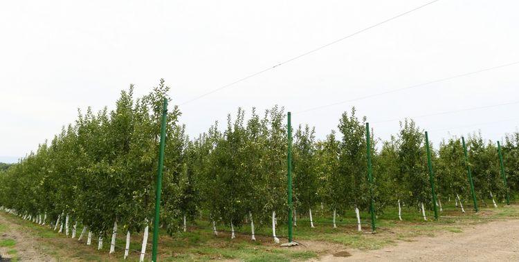 """Azerbaijani President viewed """"Bal meyvə"""" gardening in Balakan"""