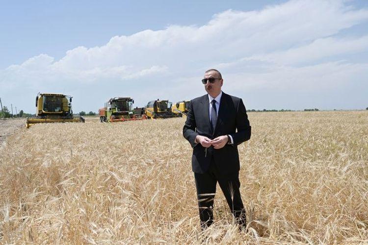 Президент Ильхам Алиев в Агджабеди принял участие в церемонии начала сбора урожая зерновых - ОБНОВЛЕНО