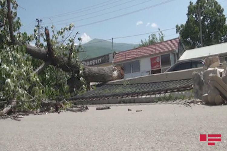 Şəkidə güclü külək iri gövdəli ağacı aşırıb, məktəbin hasarı uçub - FOTO