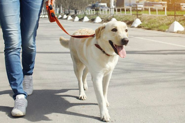 Citizens may walk their pets, dogs during strict quarantine regime in Azerbaijan