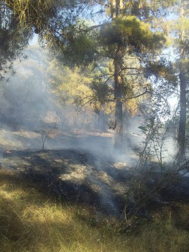 Fire on Agsu pass taken under control in a number of directions - <span class='red_color'>PHOTO</span> - <span class='red_color'>VIDEO</span> - <span class='red_color'>UPDATED</span>
