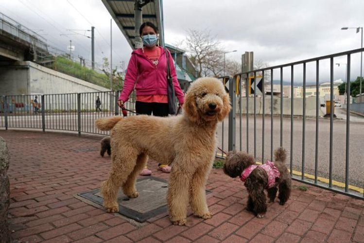 Hong Kong quarantines dog for positive coronavirus test result