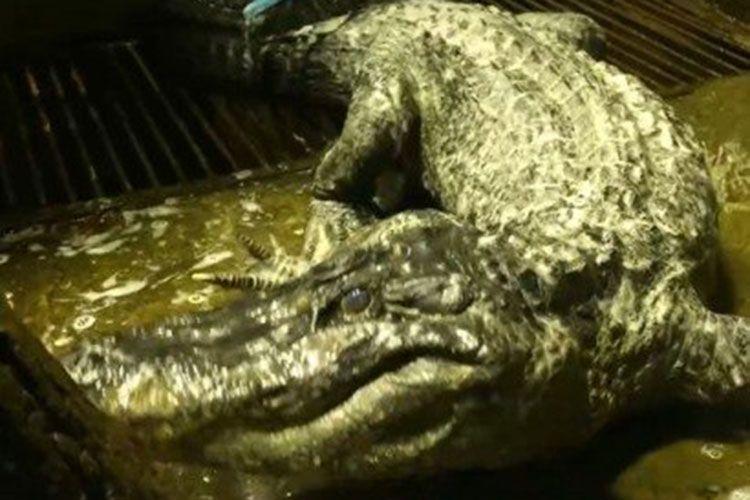В московском зоопарке скончался «личный крокодил Гитлера»