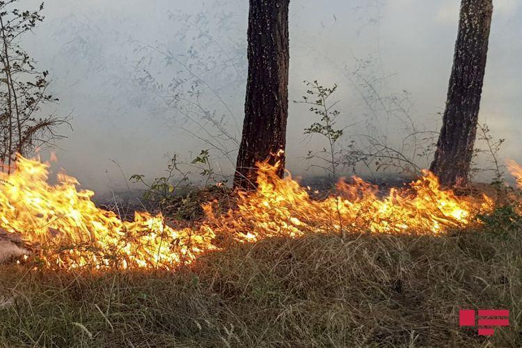 В результате артиллерийского обстрела армянами Дашкесана в лесу произошел пожар