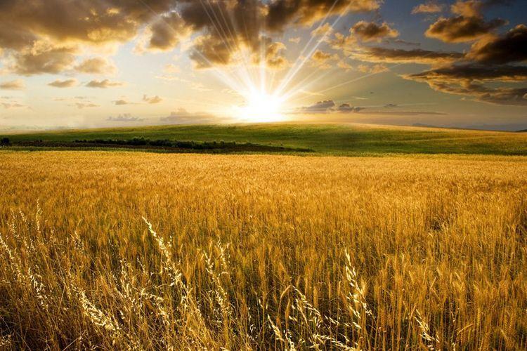Разрабатывается план деятельности по развитию сельского хозяйства на освобожденных от оккупации землях