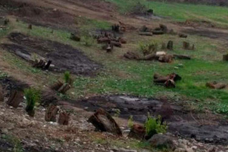 İşğaldan azad edilmiş torpaqlarda Ermənistanın törətdiyi kütləvi ekoloji terror faktları müəyyənləşdirilib