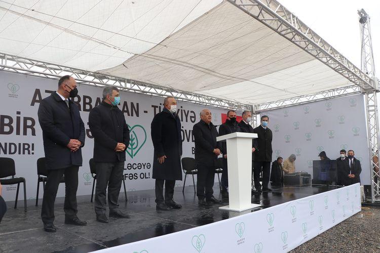 Азербайджан присоединился к масштабной акции Турции по посадке деревьев