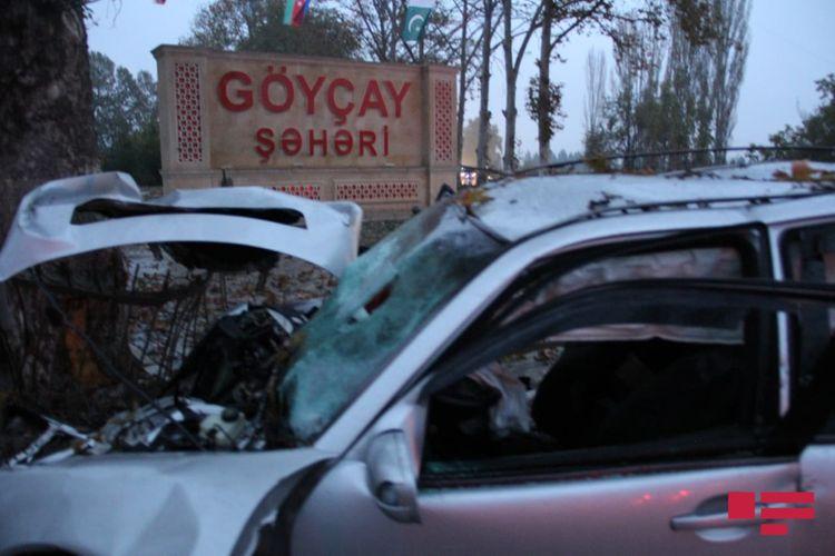 Göyçayda avtomobil ağaca çırpılıb, 3 nəfər ölüb - FOTO