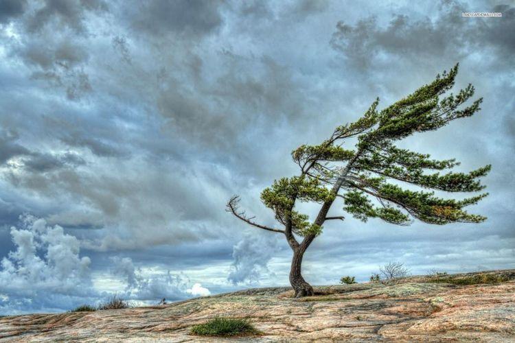 Ветер на территории республики усилится - ПРЕДУПРЕЖДЕНИЕ