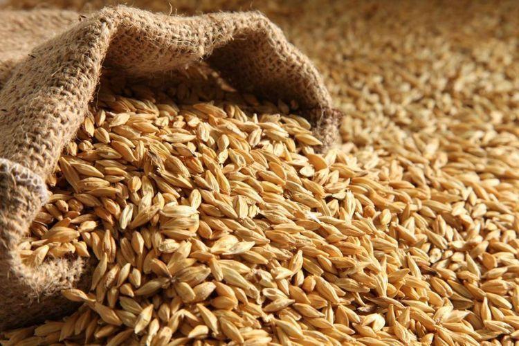 В сентябре Азербайджан увеличил импорт пшеницы на 11%