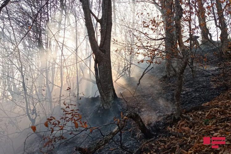 Потушен пожар, произошедший в лесу в Гёйгёле в результате артобстрела со стороны ВС Армении – ОБНОВЛЕНО