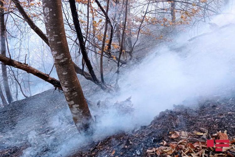 Ermənilərin Goranboya mərmi atması nəticəsində meşəlik ərazidə baş vermiş yanğın söndürülüb - YENİLƏNİB
