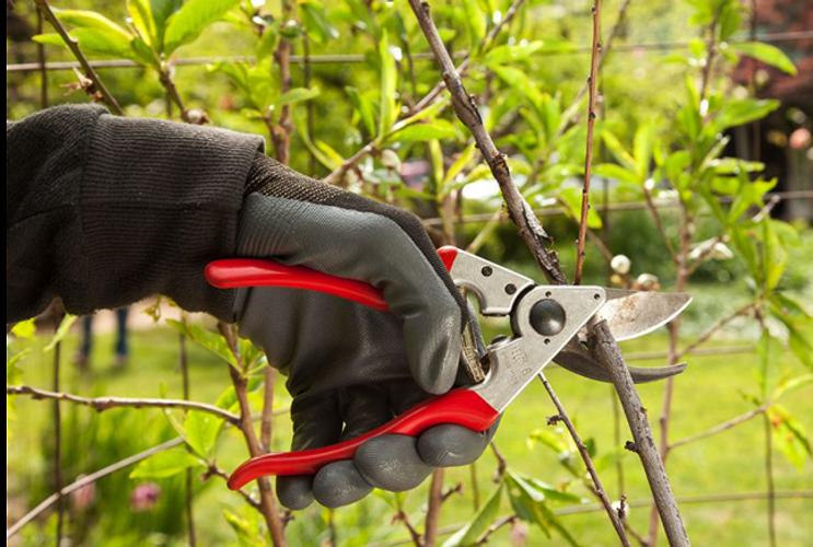 Azərbaycanda ağacların budaması zamanı istifadə olunan effektiv məlhəmin kütləvi istehsalına başlanılıb