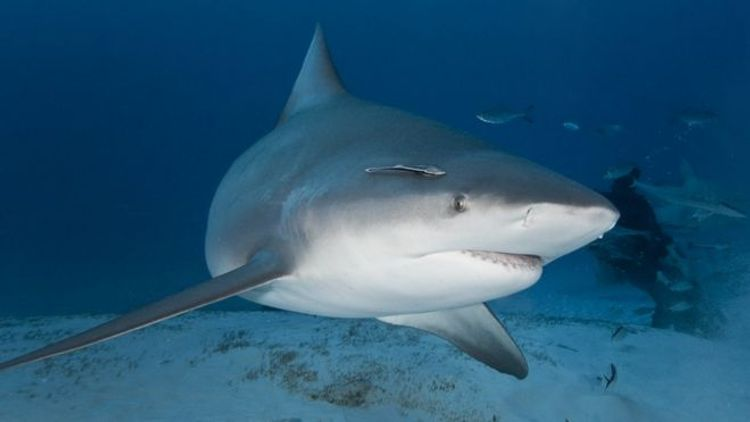 Pregnant woman rescues husband from shark attack in Florida