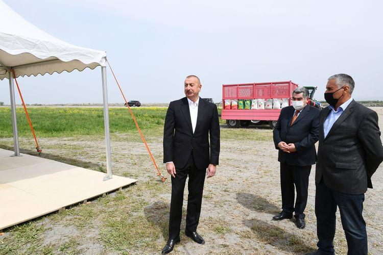Prezident İlham Əliyev Hacıqabulda pambıq tarlasında səpin prosesini izləyib - <span class=