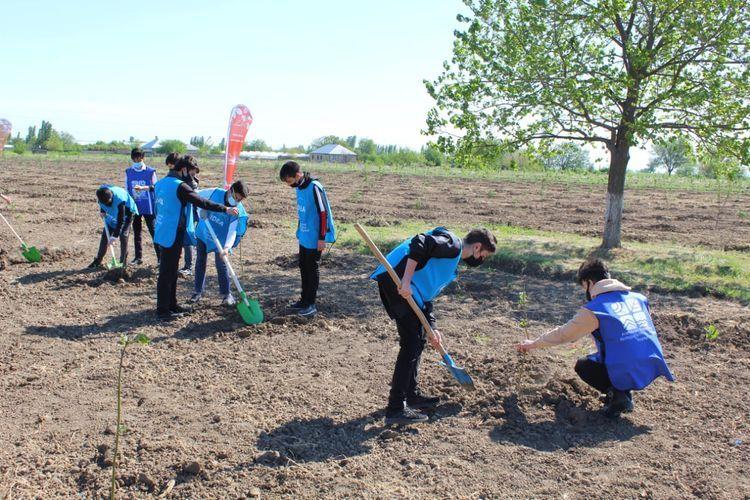 В рамках «Зеленого марафона» посажены медоносные деревья