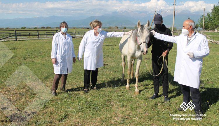 Respublika Atçılıq Turizm və Atüstü Milli Oyunlar Mərkəzindəki atlara tibbi yardım göstərilib
