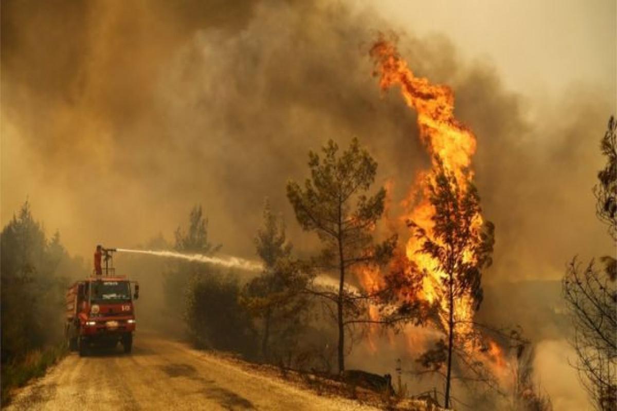 Турецкий министр: Из 101 пожара уже взят под контроль 91
