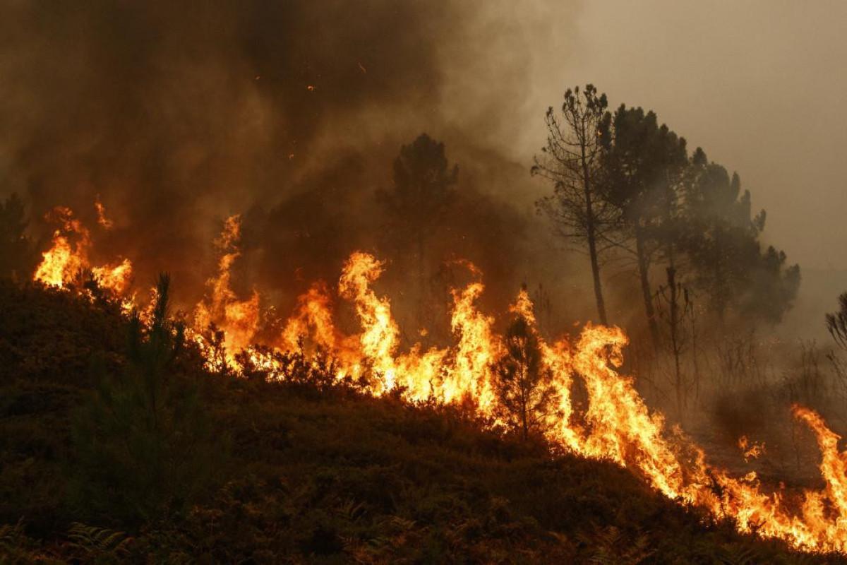 В Мармарисе снова начался пожар-APA TV  с места происшествия