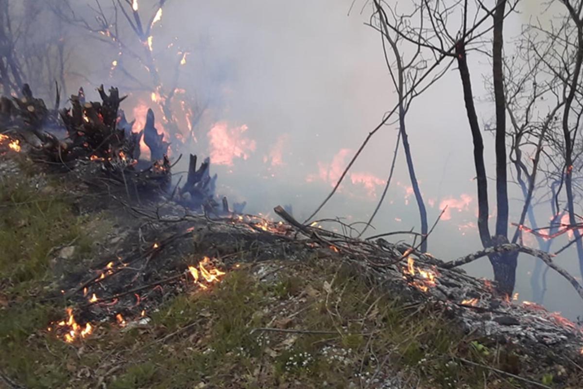 Helicopter involved in extinguishing fire in forest strip in Azerbaijan's Yardimli