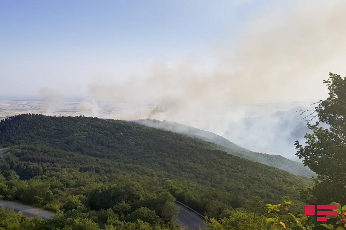 Пожар, возникший в лесном массиве в Лянкяране, потушен-ОБНОВЛЕНО