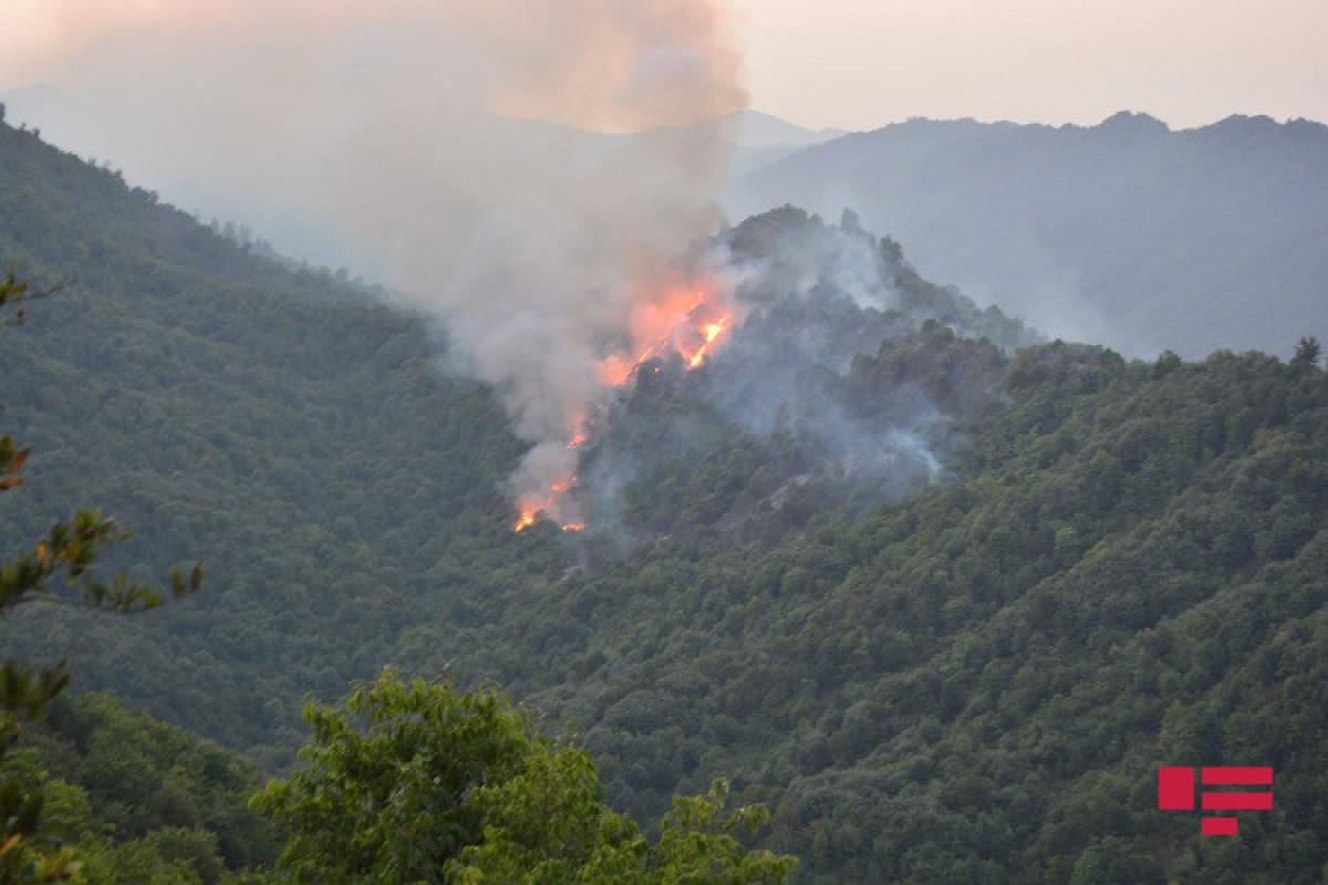 МЧС: В Лянкяране в лесополосе на площади 10 гектаров сгорели кустарники, сухая трава и частично деревья