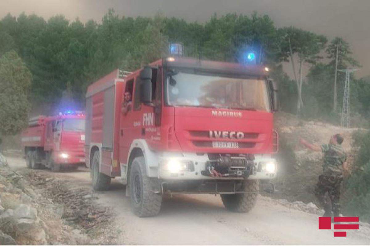 В Турции продолжаются лесные пожары