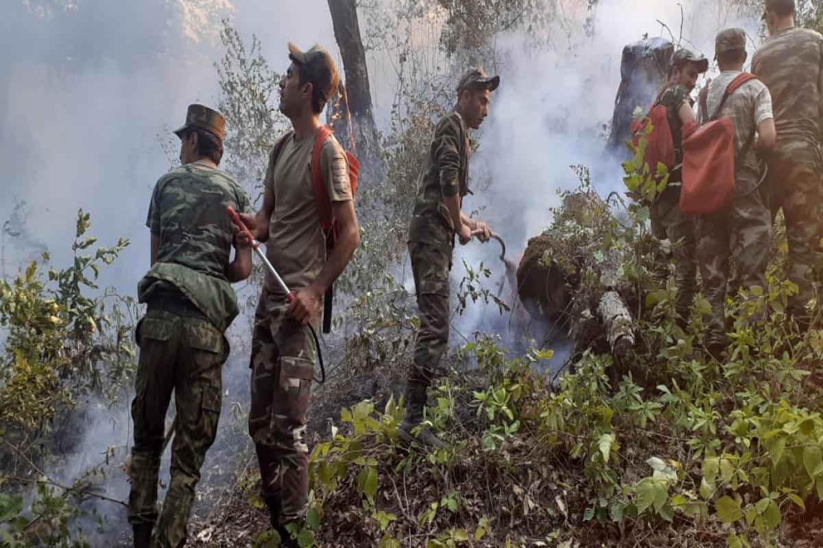 Пожар в лесной полосе в Ярдымлы потушен-ОБНОВЛЕНО