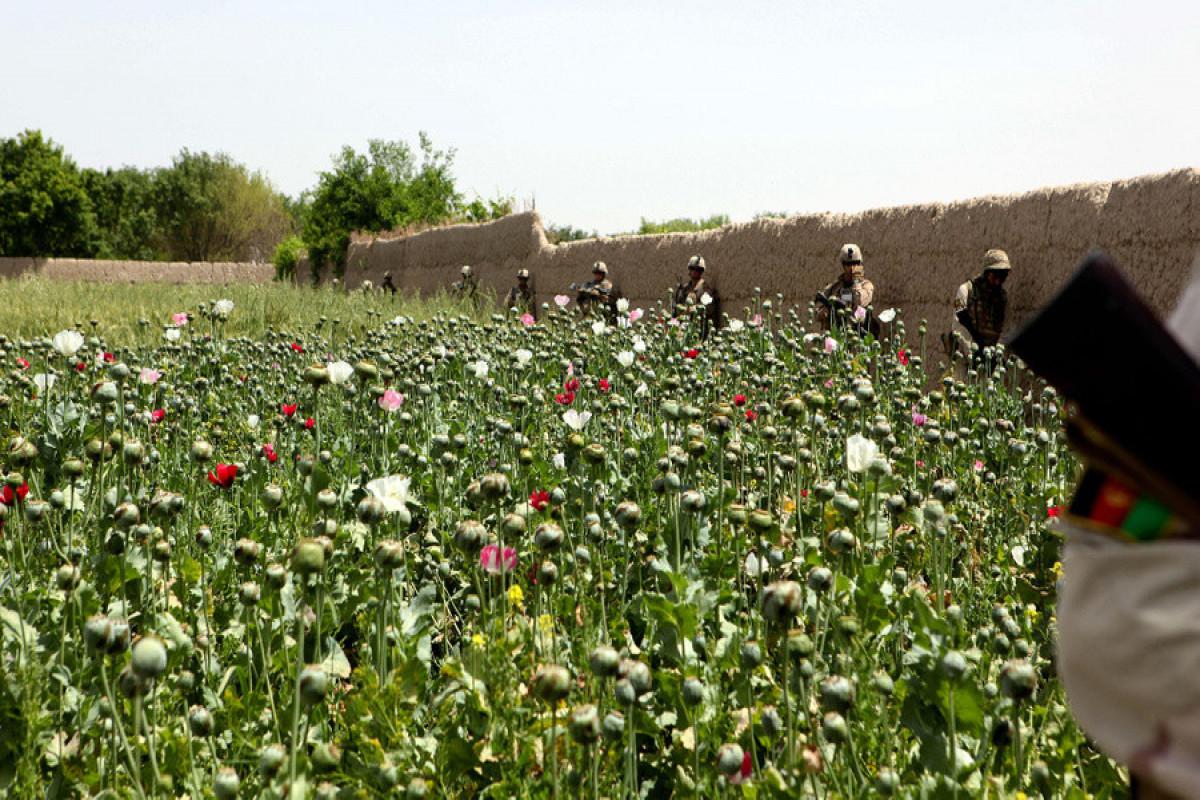 Шойгу: Маковые плантации в Афганистане при США увеличились в сто раз