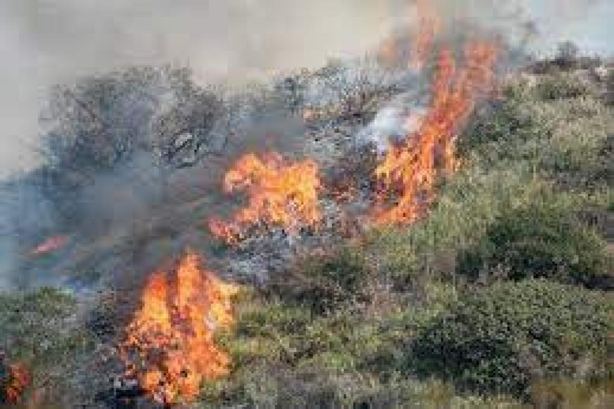 В Исмаиллы начался пожар в горной местности
