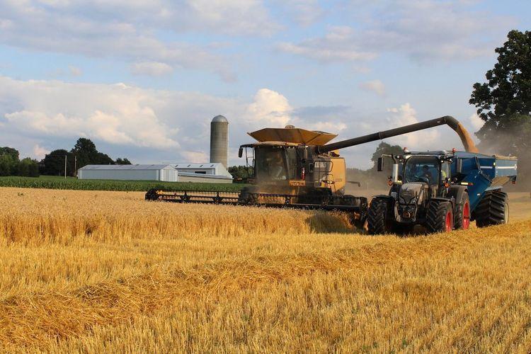 Азербайджан увеличит производство пшеницы в 2021-2024 годах – ПРОГНОЗ