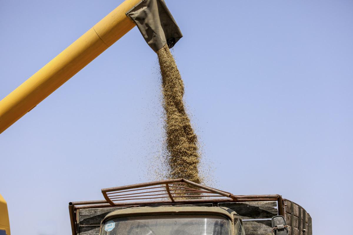 Азербайджан вошел в пятерку стран-импортеров зерна из Красноярска