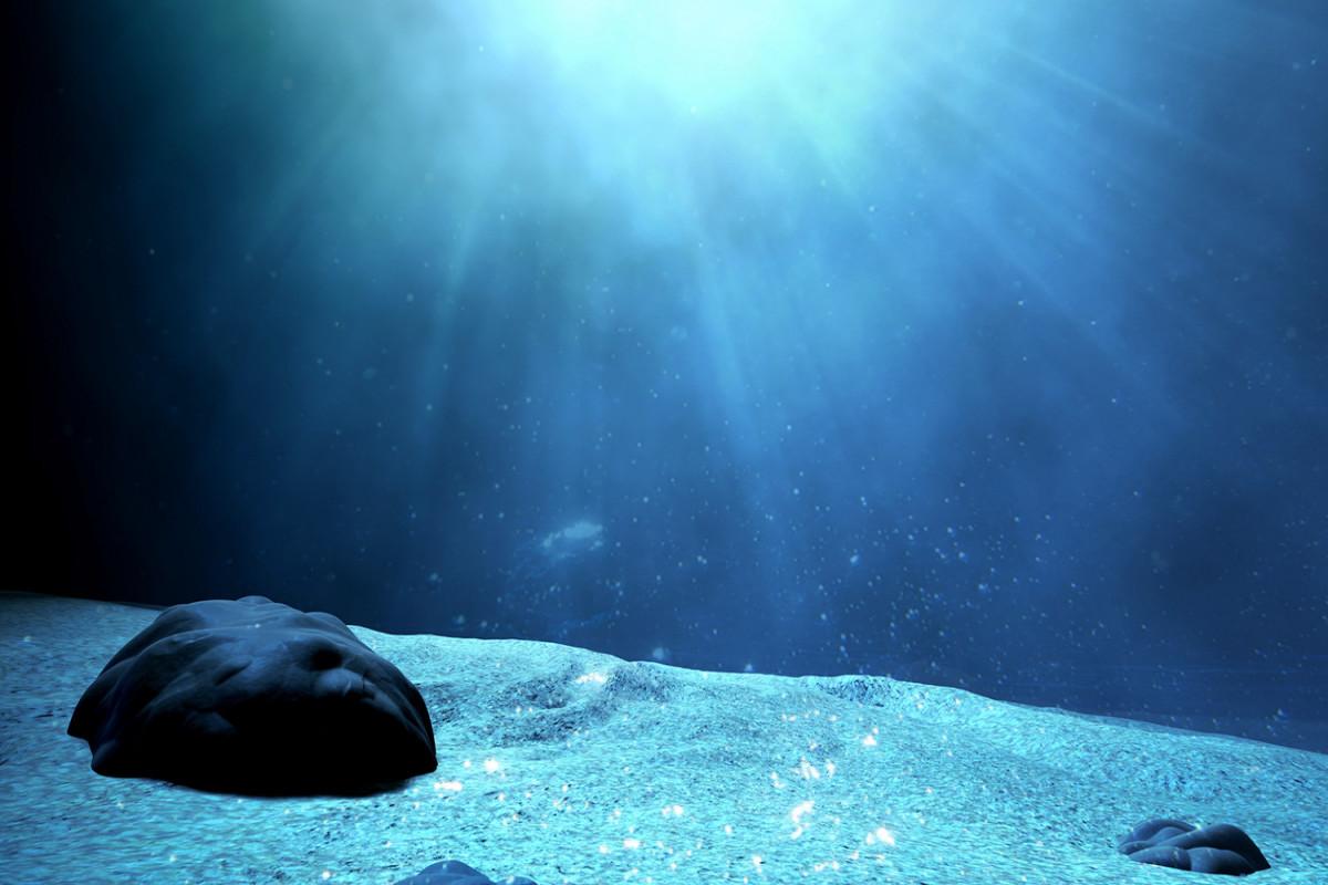 Около миллиарда морских обитателей сварились в океане заживо из-за жары в Канаде