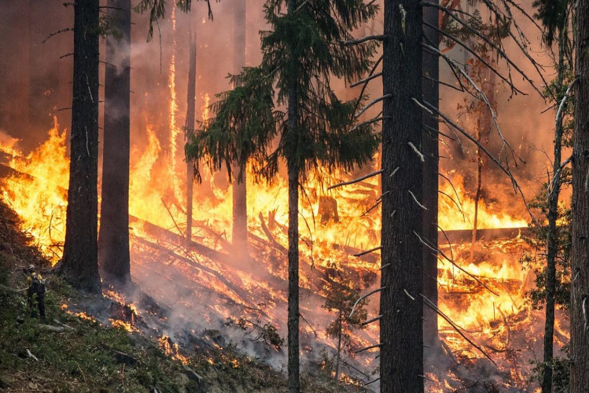 Forest fire kills one in Russia's Chelyabinsk region
