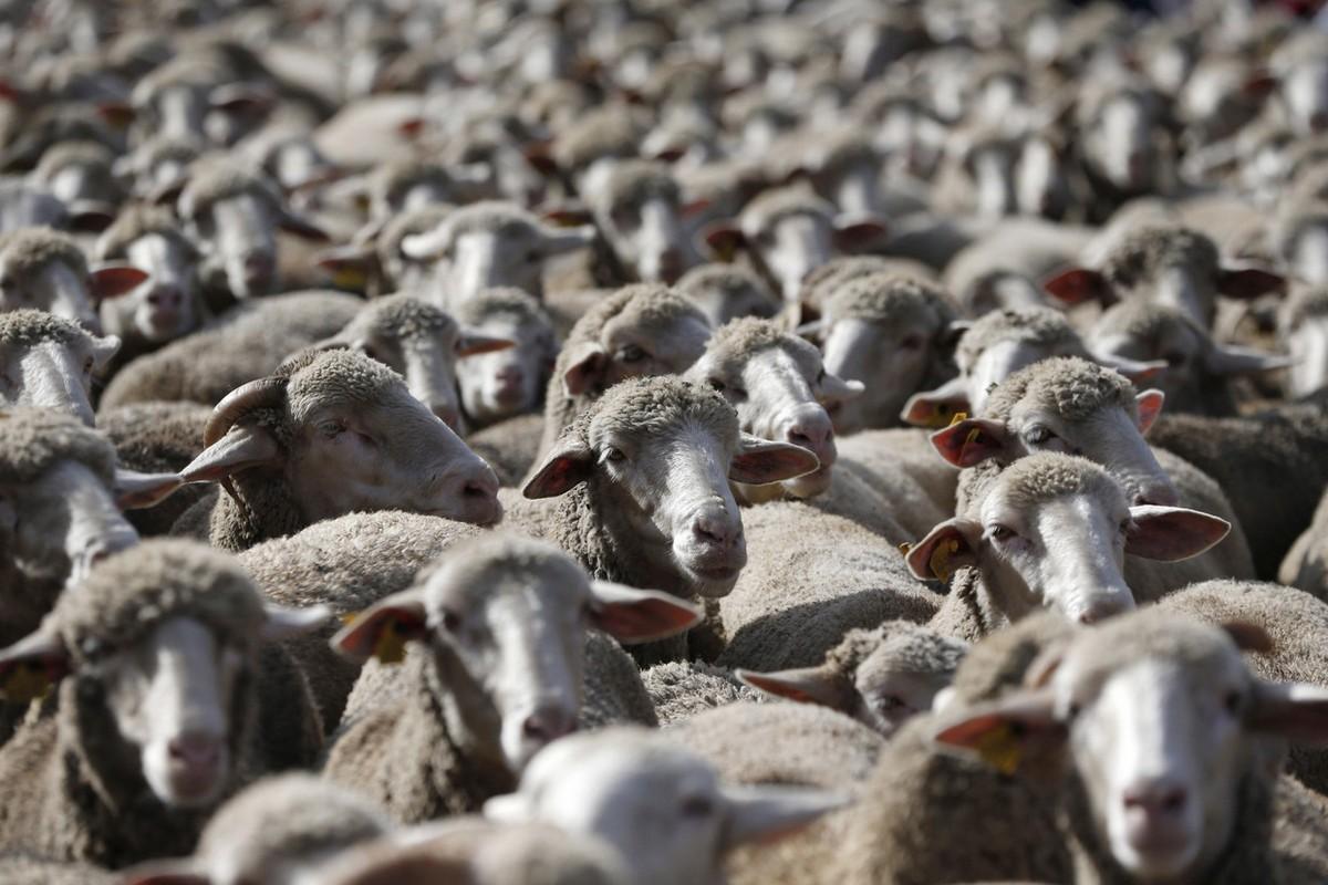 В дни праздника Гурбан байрамы по 88 адресам будут организованы услуги по продаже и забою скота