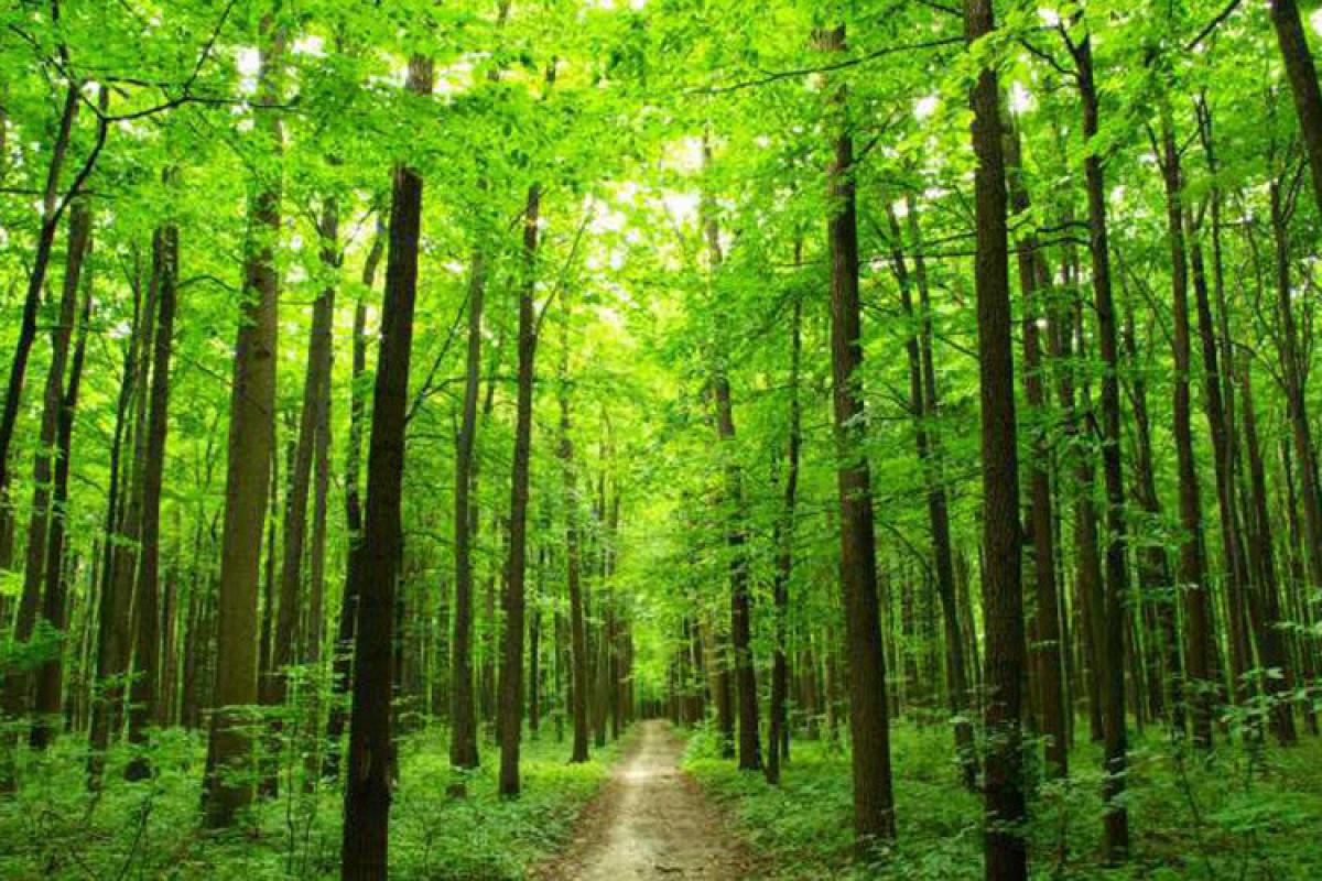 Будет создан Электронный атлас лесов
