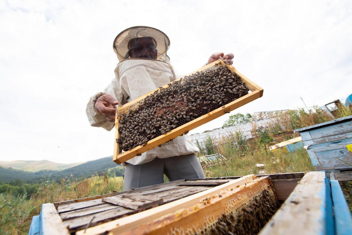 Завершен перевод пчеловодческих хозяйств на пастбища Лачина