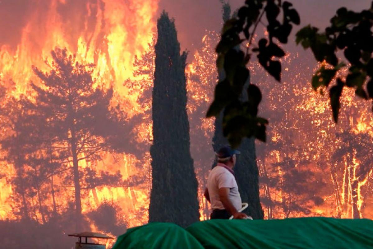 Число жертв лесных пожаров в Турции увеличилось до четырех, пострадали 183 человека