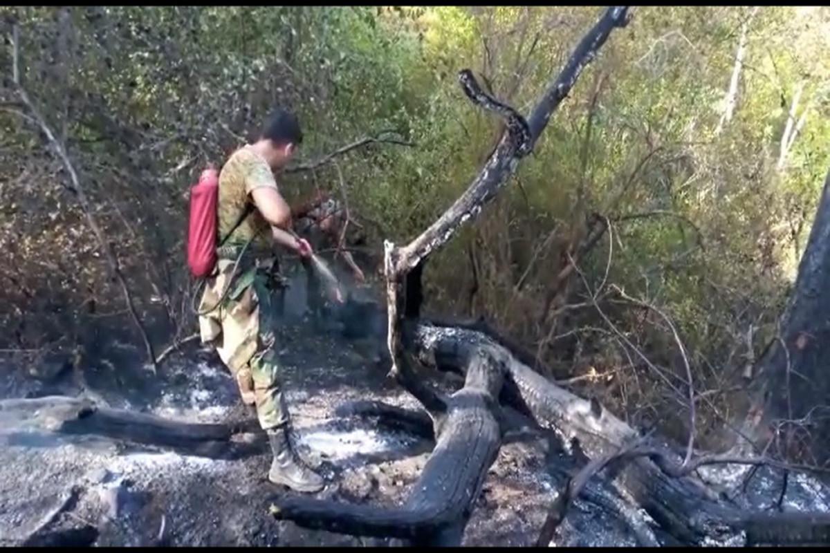 Турецкие и азербайджанские пожарные вместе участвуют в тушении пожара