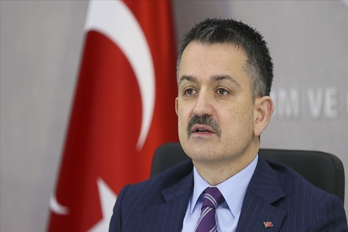 91 of 101 forest fires under control in Turkey: Minister