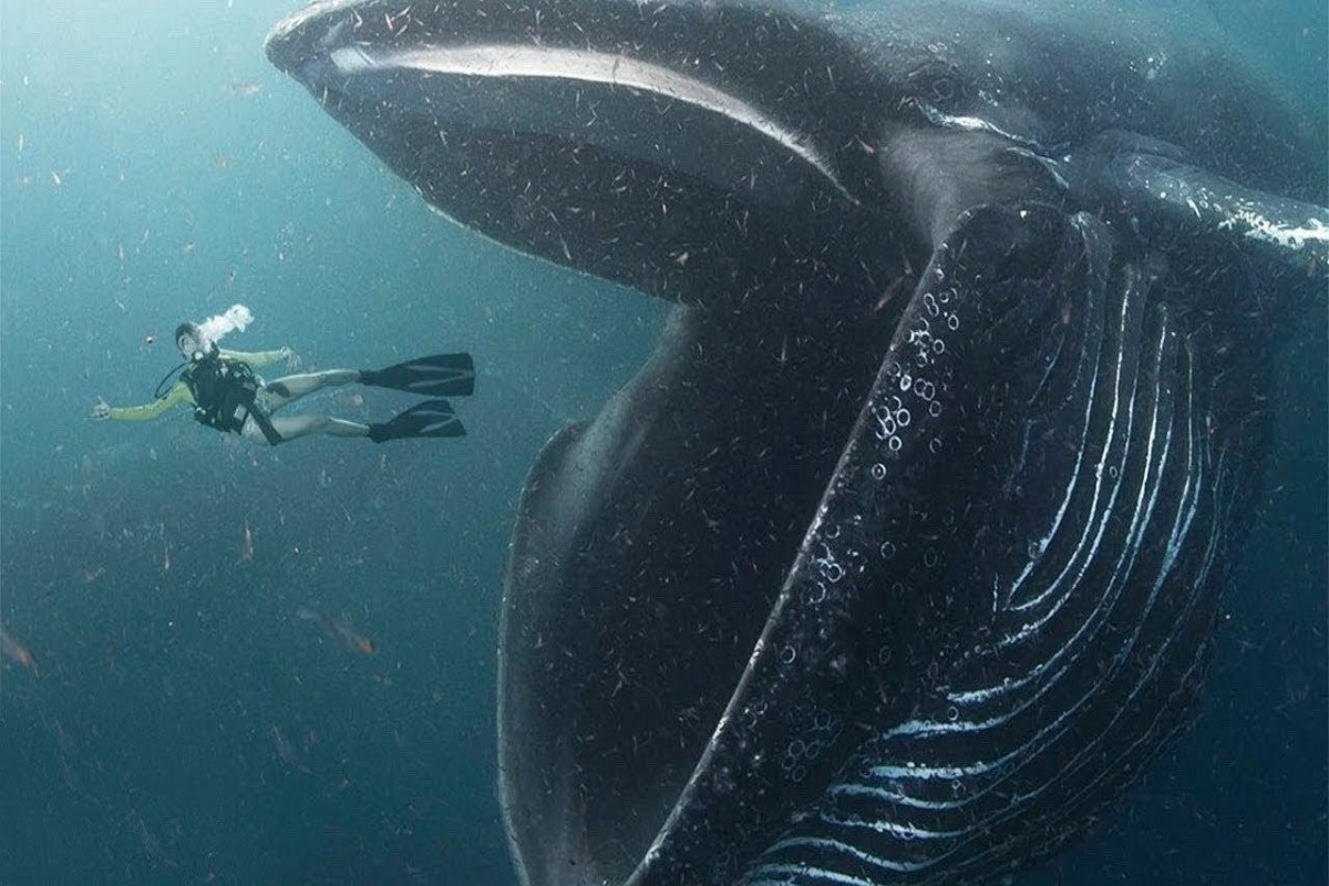 Аквалангист в США выжил после того, как его проглотил кит