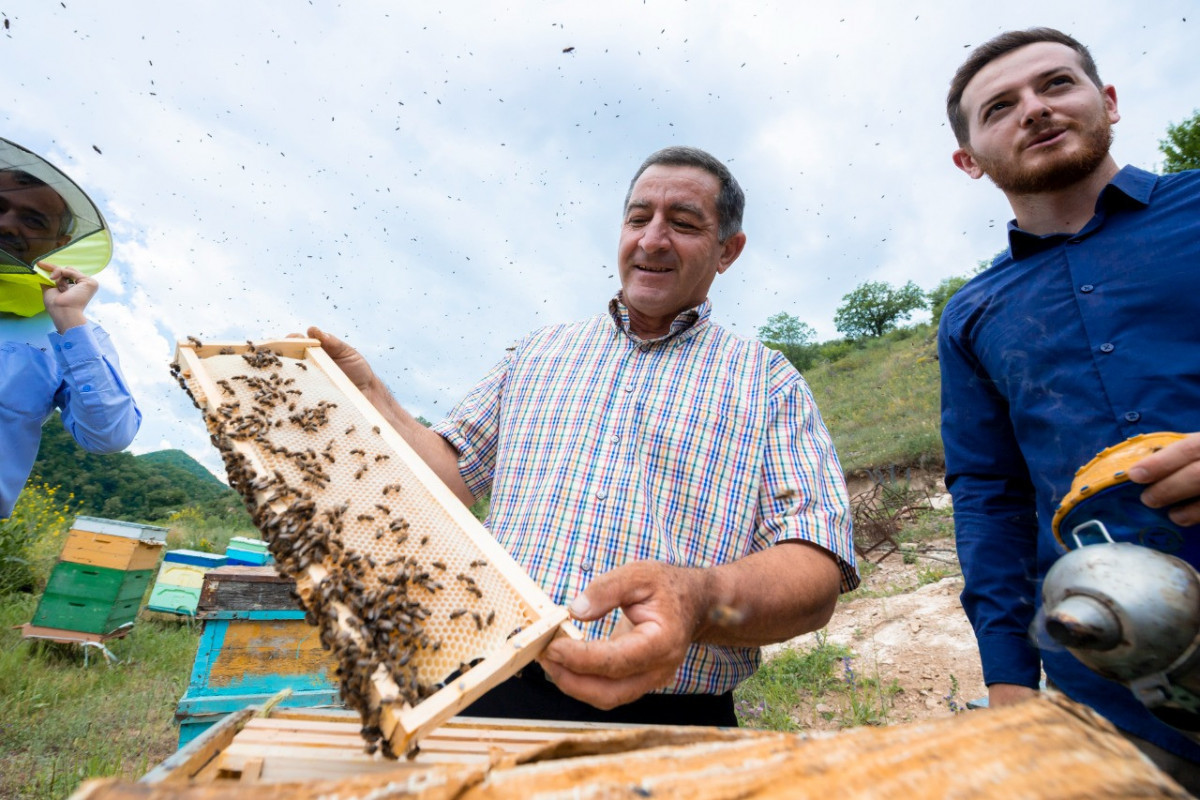 """Relocation of sheep breeding and beekeeping farms to Kalbajar pastures completed-<span class=""""red_color"""">PHOTO"""