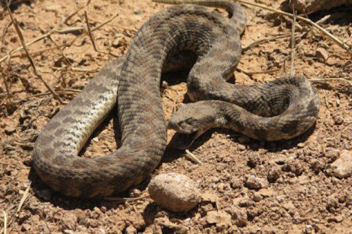 В Нафталане 4-летнюю девочку ужалила змея