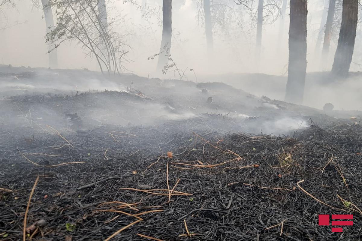 МЧС: Пожары в Губе и Шабране потушены