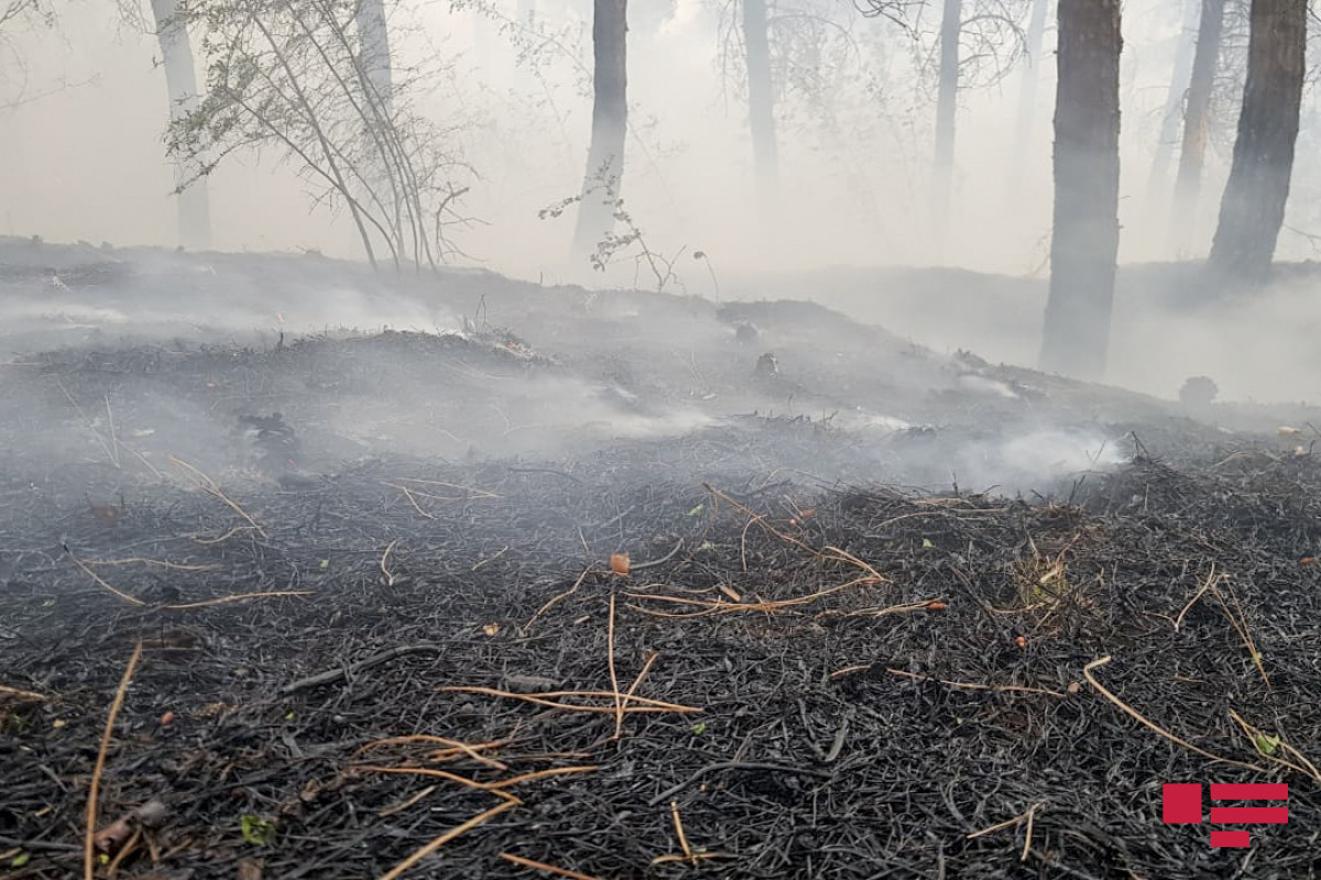 МЧС: Пожар в Хачмазе потушен